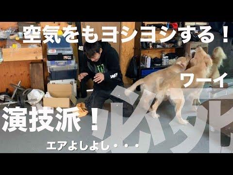 【実験】愛犬はどこまで嫉妬してくれるのか?