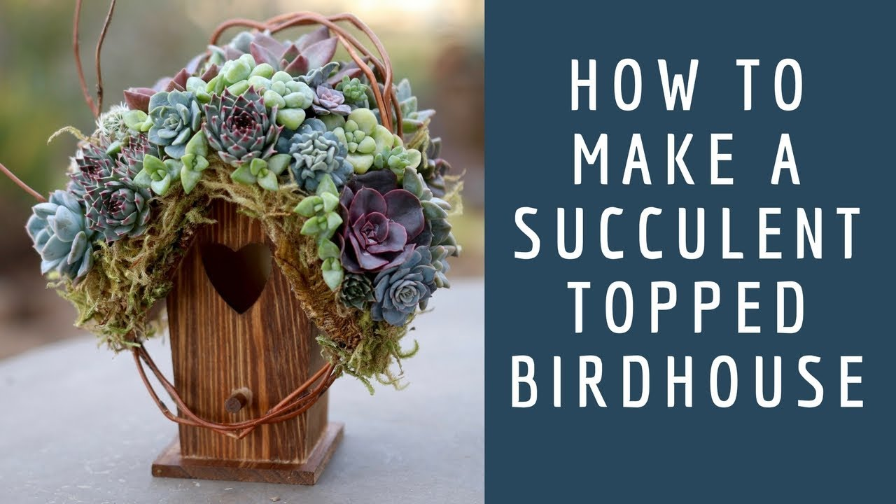 how-to-make-a-succulent-topped-birdhouse-garden-answer