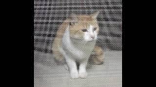 近所の野良猫ちゃん thumbnail
