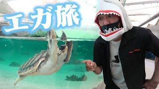 【エガ旅】おしゃべりベルーガ君に会ってきた 鴨川シーワールド/Beluga Whales