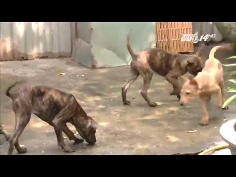 (VTC14)_ Kinh nghiệm chọn chó khôn giữ nhà