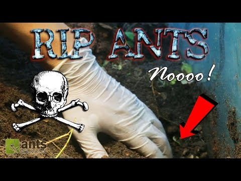 All Ants Dead?