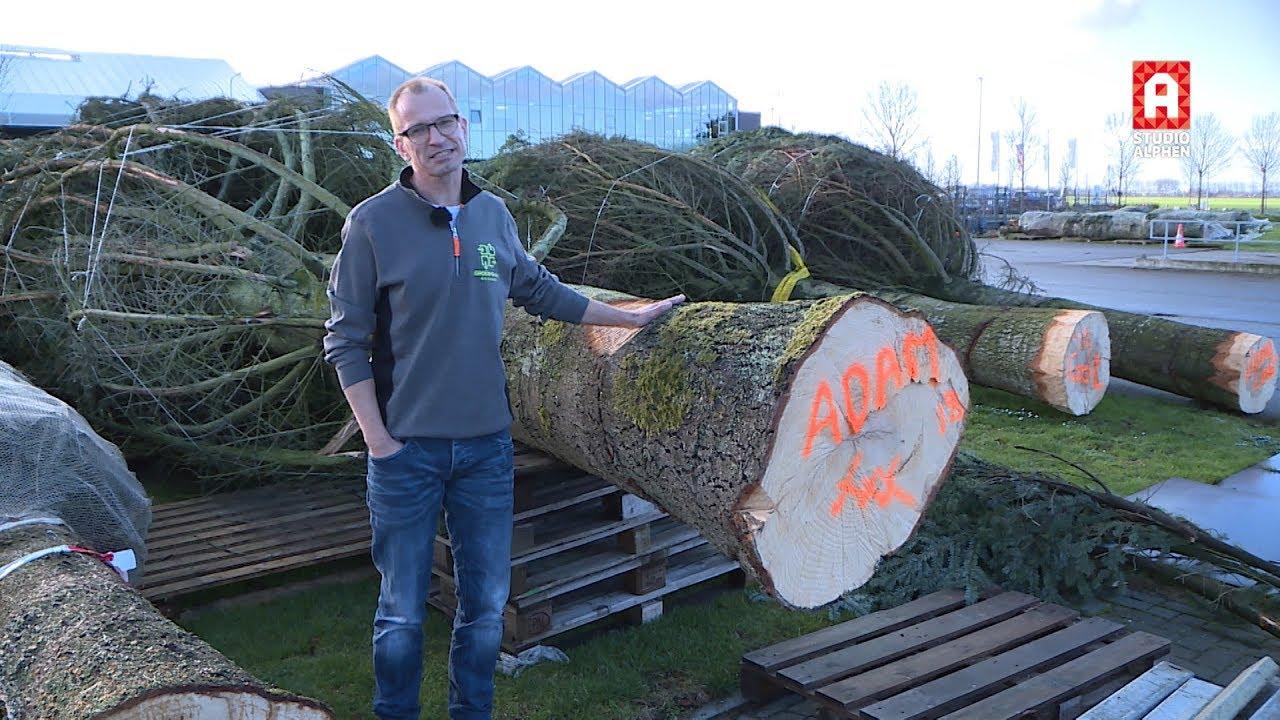 Gigantische Kerstbomen Via Groen Direkt Uit Boskoop Door Heel Nederland