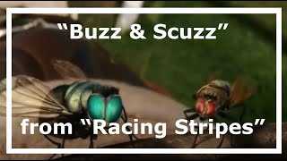 Some scenes of Buzz and Scuzz from Racing Stripes. Animation by Hyb...