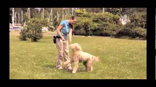 Learn Some Advanced Dog Training Lessons And Really Cool Dog Tricks.