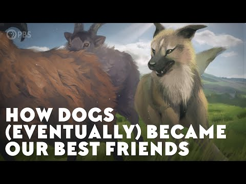 How Dogs (Eventually) Became Our Best Friends