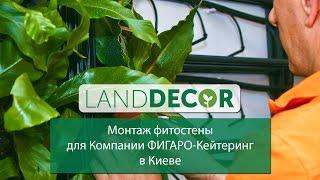 Монтаж фитостены от LAND DECOR для Компании ФИГАРО-Кейтеринг в Киеве(, 2015-05-07T15:34:10.000Z)