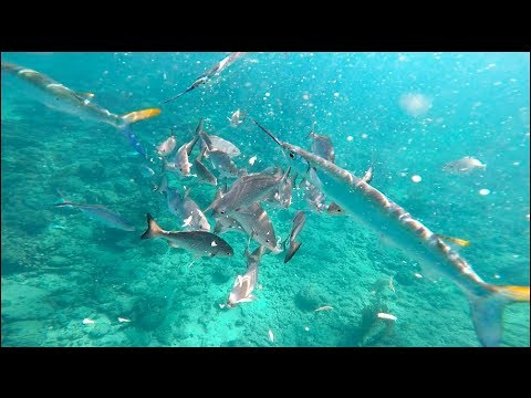 If YOU Chum, They Will COME! Hand Feeding Reef Fish!