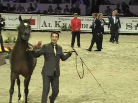 Royal Colours - Championnat du Monde du Cheval Arabe 2009