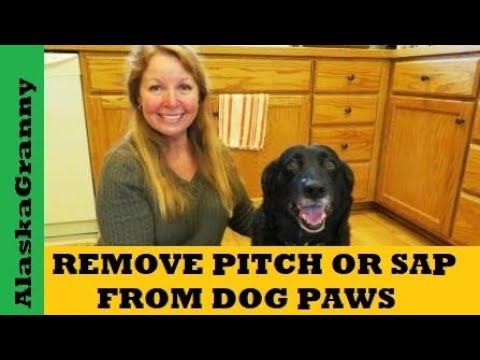 Remove Pitch or Sap from Dog Paws Feet