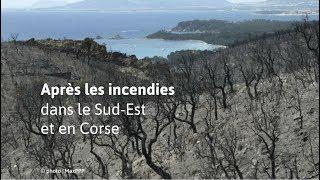 Les images après les incendies en PACA et en Corse
