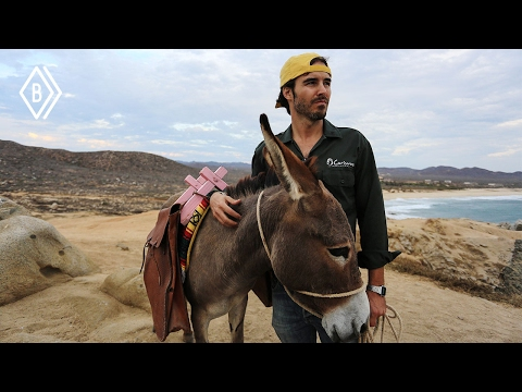 These facts about donkeys will blow your mind!