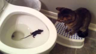 кошка и мышка    в унитазе