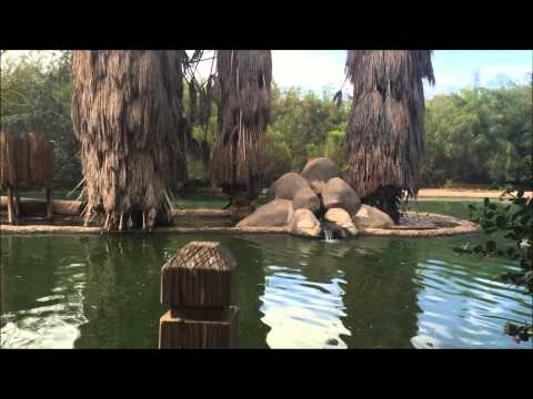 3rd of July Day of Fun: AZ Wildlife World Zoo & Fireworks