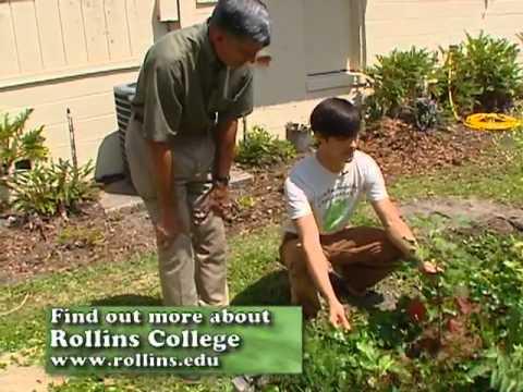 Central Florida Gardening - Organic Raised Beds