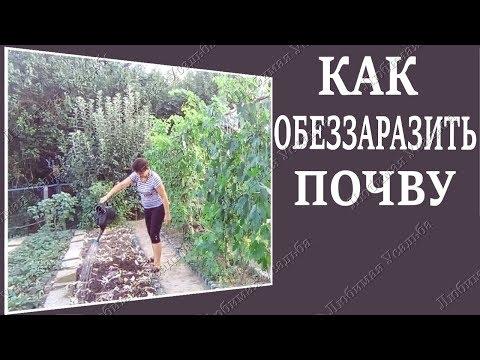 Как обеззаразить почву перед посадкой