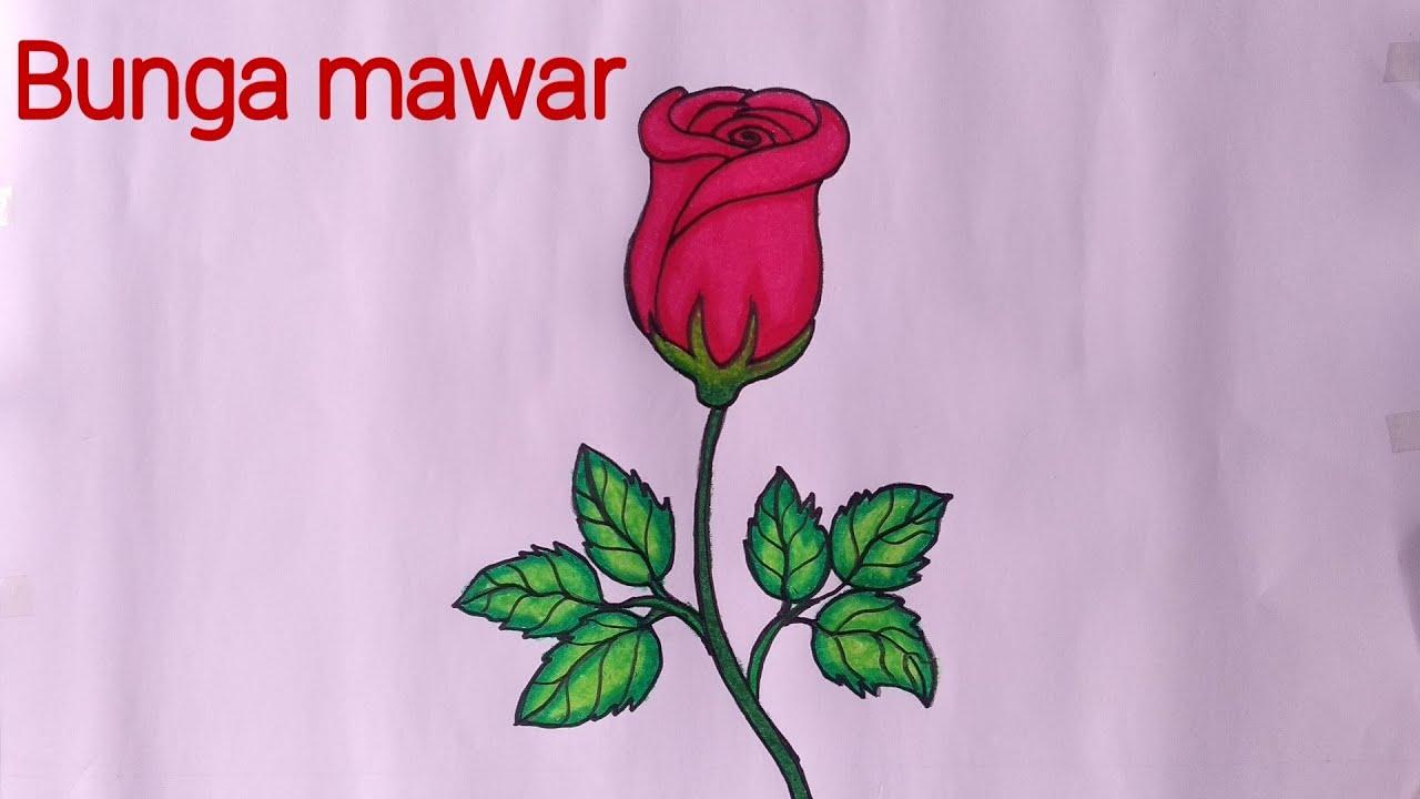 Cara Menggambar Bunga Mawar Menggambar Dan Mewarnai Bunga Mawar Youtube