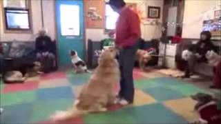 Chicago Dog Training: Dog Improvement With Peggy Moran, Sky And Barb, Winter 2011.wmv
