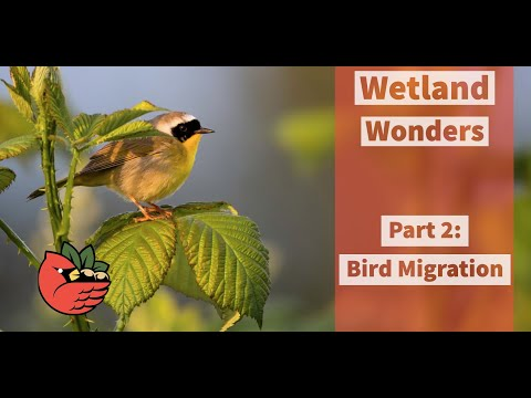 Wetland Wonders - Part 2: Bird Migration