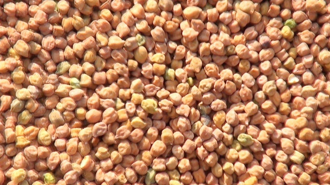bengal gram kalamna market nagpur youtube