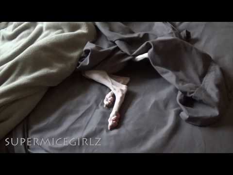 Adorably disobedient Italian Greyhound ... Her daily hide n seek routine ...