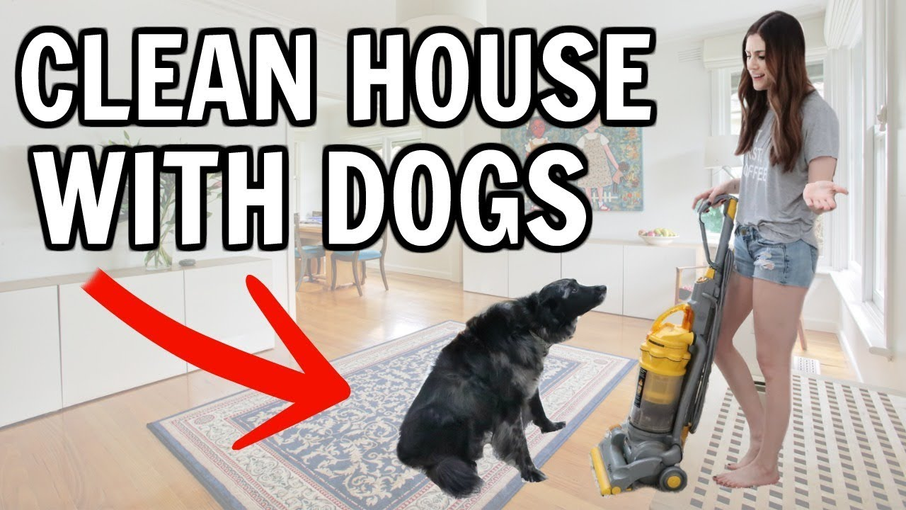 Clean With Me How To Have A House Dogs