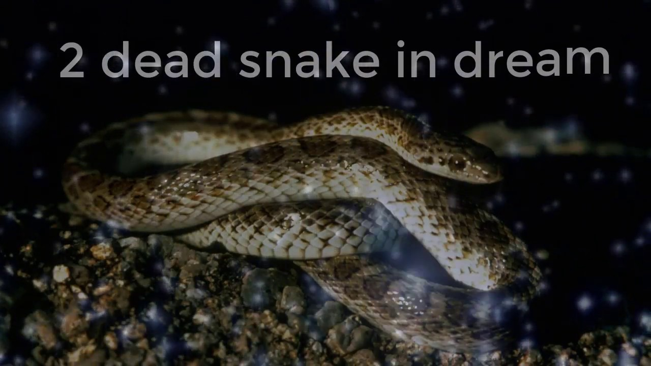 2 Dead Snake In Dream Dreams Meaning And Interpretation Youtube