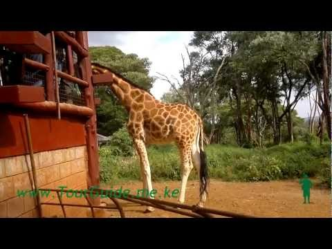 The Giraffe Center - Nairobi