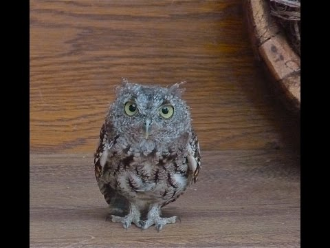 Owl As A Spirit Guide--What It Means When You Are Suddenly Seeing Owls Everywhere
