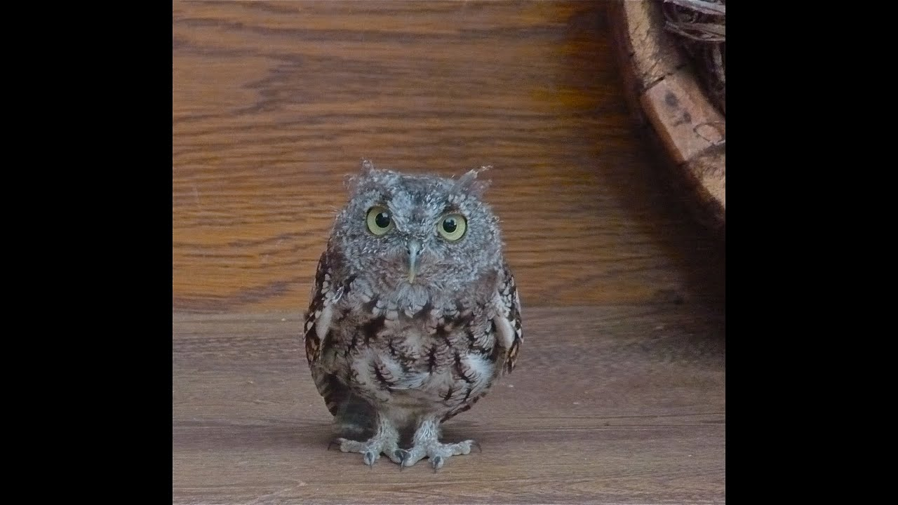 Owl as a spirit guide what it means when you are suddenly seeing owl as a spirit guide what it means when you are suddenly seeing owls everywhere youtube biocorpaavc Images
