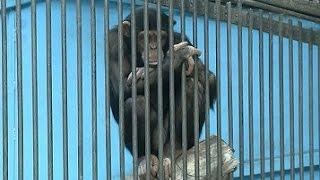 Алматинцы покупают живых обезьян к празднику (30.12.15)