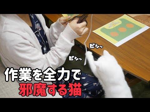 小道具作りを邪魔する猫 #6 A cat that disturbs work