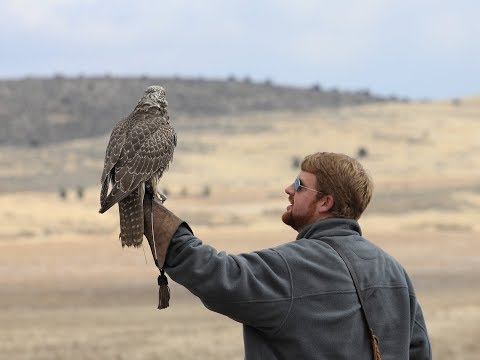 Falconry: What To Do If Your Bird Keeps Landing.