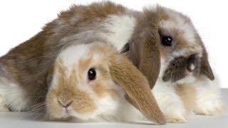 Знакомство с декоративным кроликом Его зовут Элвис