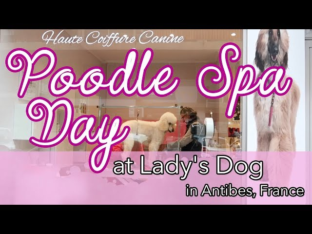 Poodle Spa Day at Lady's Dog in Antibes, France