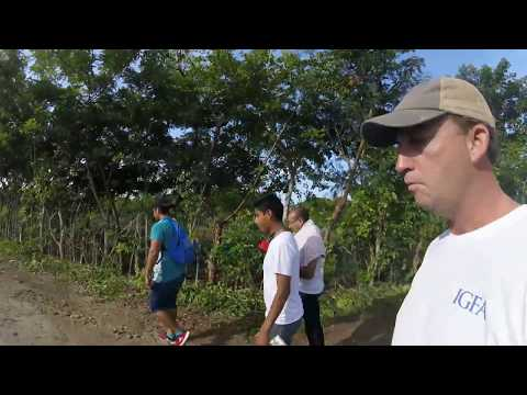 Hunting for Land Crabs in Veracruz Mexico