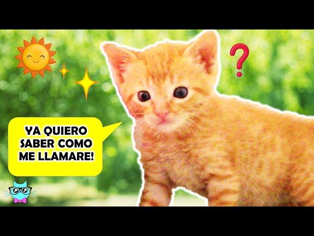 Mi Gatito NUEVO ya tiene NOMBRE!! 😺