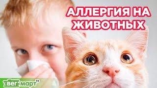 Аллергия на животных. Как избавиться от аллергии быстро. Михаил Советов