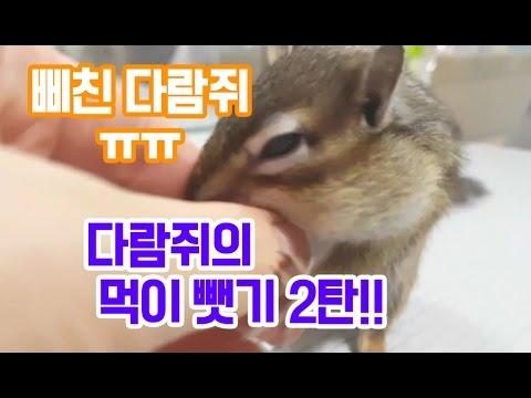 다람쥐가 먹고있는 간식 빼앗기2탄!! 삐친 다�