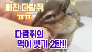 다람쥐가 먹고있는 간식 빼앗기2탄!! 삐친 다람쥐의 반응은..??