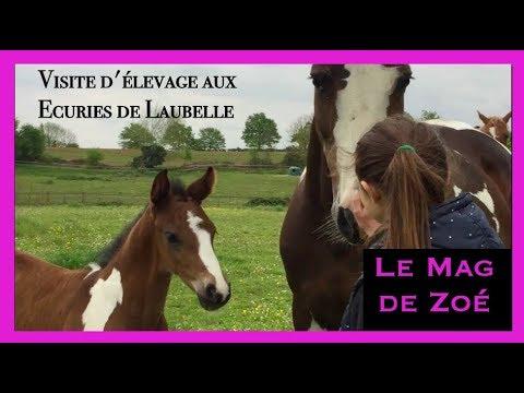 élevage de chevaux pie