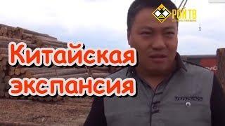 Китайцы и власть опустошают Сибитр и дальний Восток