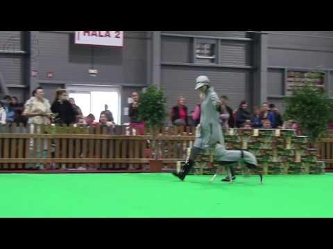 XXV. Prague Expo Dog 11 2013 - Double CACIB
