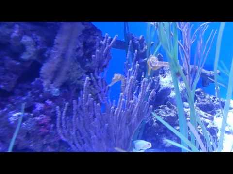 Aquarium of the Pacific: Tropical Pacific Gallery (3/3)