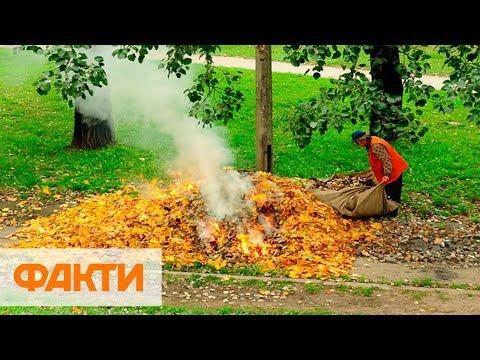 Сжигание опавших листьев: чем опасно и штрафы