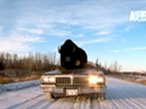 Fatal Attractions- Buffalo Rides Custom Convertible