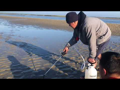 Catching Razor Clams in Barnstable, Mass