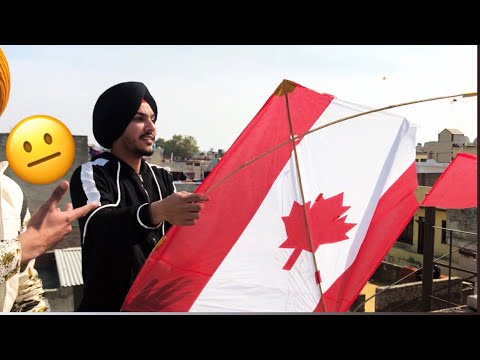 Kites Flying on Basant 2 | BIR RAMGARHIA