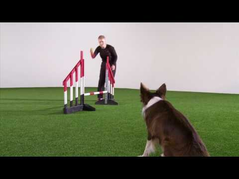 OneMind Dogs Agility Handling Technique - German Turn