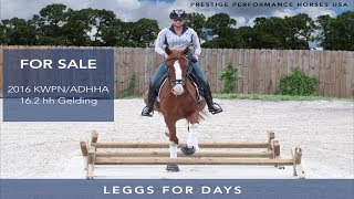 Leggs for Days Sales Video 8.26.19